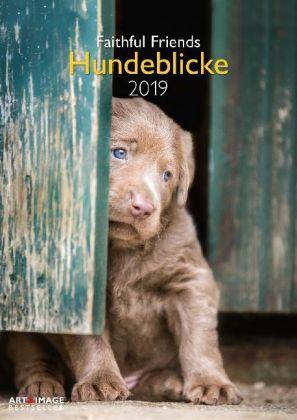 Hundeblicke 2019 Wandkalender