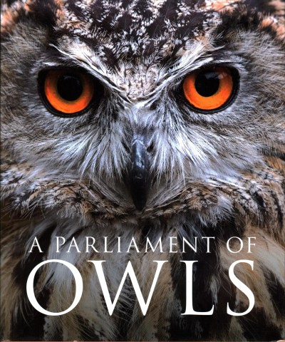 Parliament of Owls