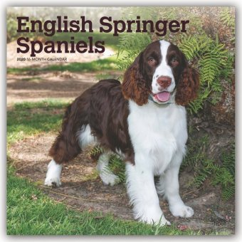 English Springer Spaniels 2020 - 18-Monatskalender mit freier DogDays-App