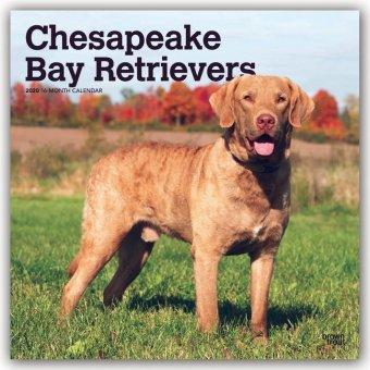 Chesapeake Bay Retrievers 2020 - 18-Monatskalender mit freier DogDays-App
