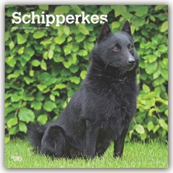 Schipperkes 2020 - 18-Monatskalender mit freier DogDays-App