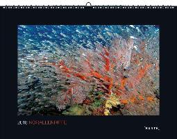 Korallenriffe 2018