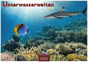 Unterwasserwelten 2018 - Format S