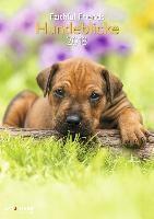 Hundeblicke 2018 Wandkalender