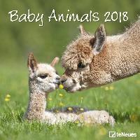 Baby Animals 2018 Broschürenkalender