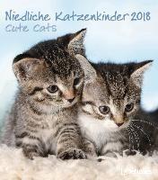 Niedliche Katzenkinder 2018