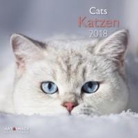 Katzen 2018 Broschürenkalender