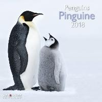 Pinguine 2018 Broschürenkalender