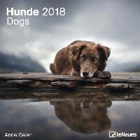 Hunde 2018 Broschürenkalender