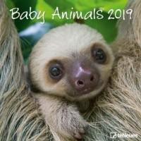 Baby Animals 2019 Broschürenkalender