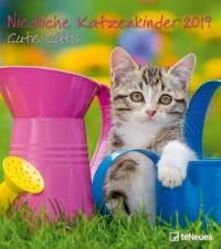 Niedliche Katzenkinder 2019