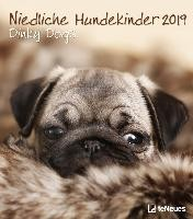Niedliche Hundekinder 2019