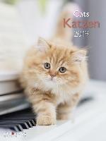 Katzen 2019 Posterkalender