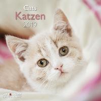 Katzen 2019 Broschürenkalender