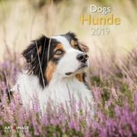 Hunde - Dogs 2019 Broschürenkalender