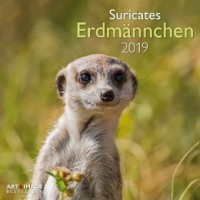 Erdmännchen 2019 Broschürenkalender