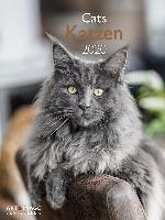 Katzen 2020 Posterkalender