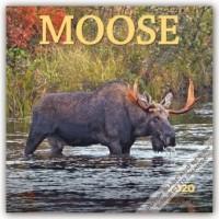 Moose - Elche 2020 - 16-Monatskalender