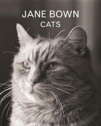 Jane Bown: Cats