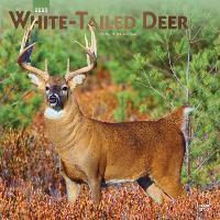 White-tailed Deer - Virginiahirsche 2020 - 18-Monatskalender
