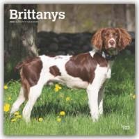 Brittanys - Epagneul Breton 2020 - 18-Monatskalender mit freier DogDays-App