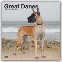 Great Danes - Dänische Doggen 2020 - 18-Monatskalender mit freier DogDays-App