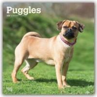 Puggles 2020 - 18-Monatskalender mit freier DogDays-App