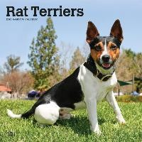 Rat Terriers - Rat Terrier 2020 - 18-Monatskalender mit freier DogDays-App