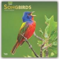 Songbirds - Singvögel 2020 - 18-Monatskalender