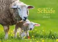 Schafe 2018
