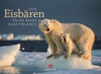 Eisbären 2018