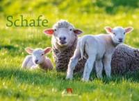 Schafe 2019