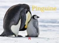Pinguine 2019