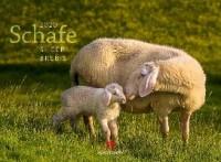 Schafe 2020