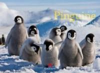 Pinguine 2020