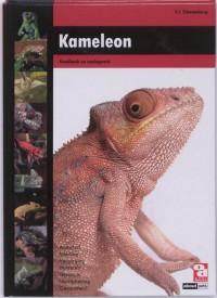 Over Dieren Kameleon