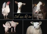 Ode aan het vee